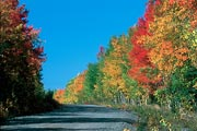 Fall colors were in full glory along this backroad in Central Alaska.