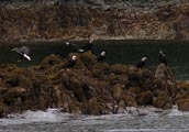 This small island was a favorite land spot for the Bald Eagles in the area.