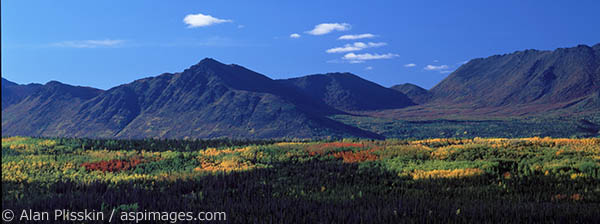 The canopy in Central Alaska was aglow in color.