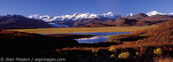 Fall colors along Denali Highway to Tok.