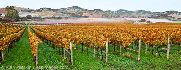The change of seasons in the Carneros region of Napa County can be quite dramatic.  I went to capture the early morning light on the colorful vineyards and was lucky to have a bit of fog too.