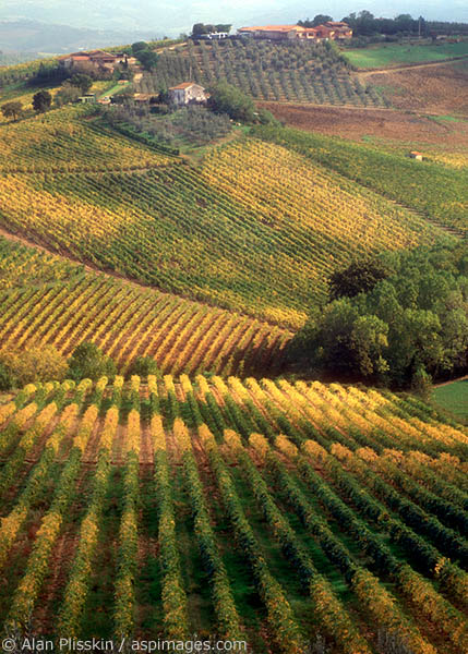 Hillside vineyards in San Gimignano, Italy, turn color in Autumn.