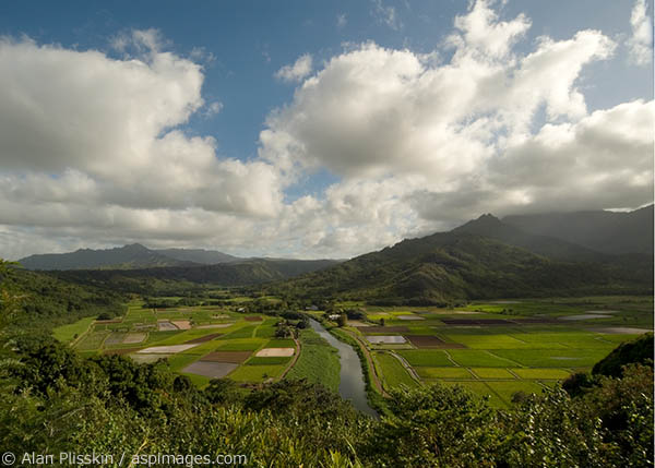 A patchwork of Kauai's taro fields glow in the morning light.