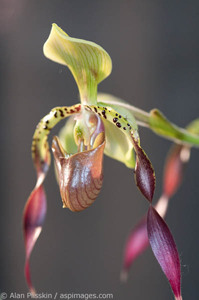 Orchids are amazingly delicate and intricate flowers.