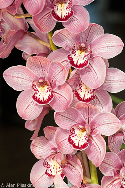 These orchids looked too perfect to be real.