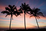 Three palm trees are silhouetted at sunset in Hawaii.