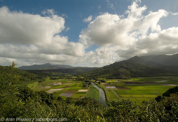 Taro fields and the Hanalei River.