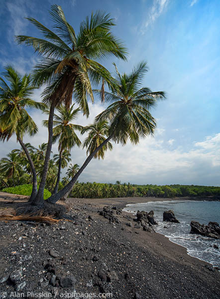 "This hard to reach beach screamed ""Hawaii"" when I came upon it. That these palms can survive in their small patch of black sand amazes me."