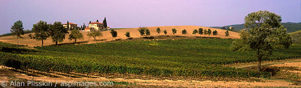 Panoramic view of the vineyards in central Tuscany.