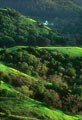 In wet years, Marin County can turn extremely verdant.