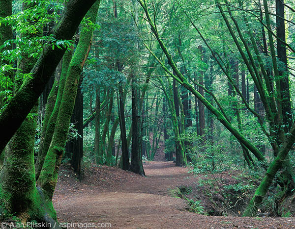 Although near town, the Baltimore Canyon trail has the feel of being in a wilderness forest.