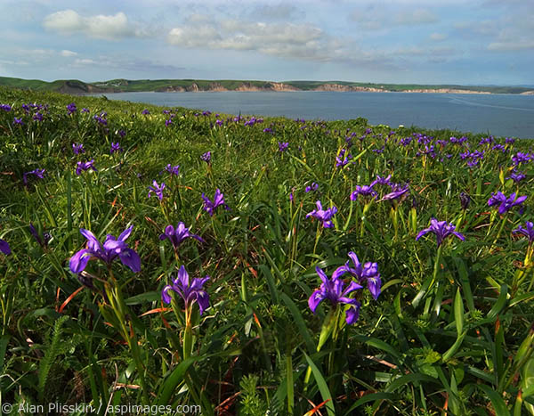 Depending on Mother Nature, wildflowers can be plentiful at Point Reyes National Seashore.