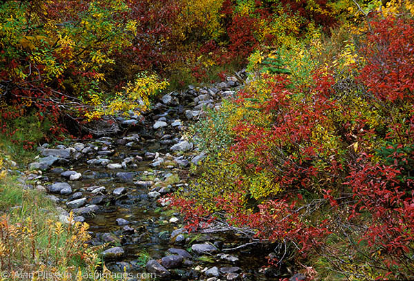 This small creek in eastern Glacier National Park was awash in color when we arrived.