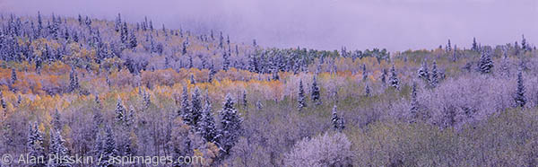 A late Autumn storm left a dusting of snow on the forest in central Utah.